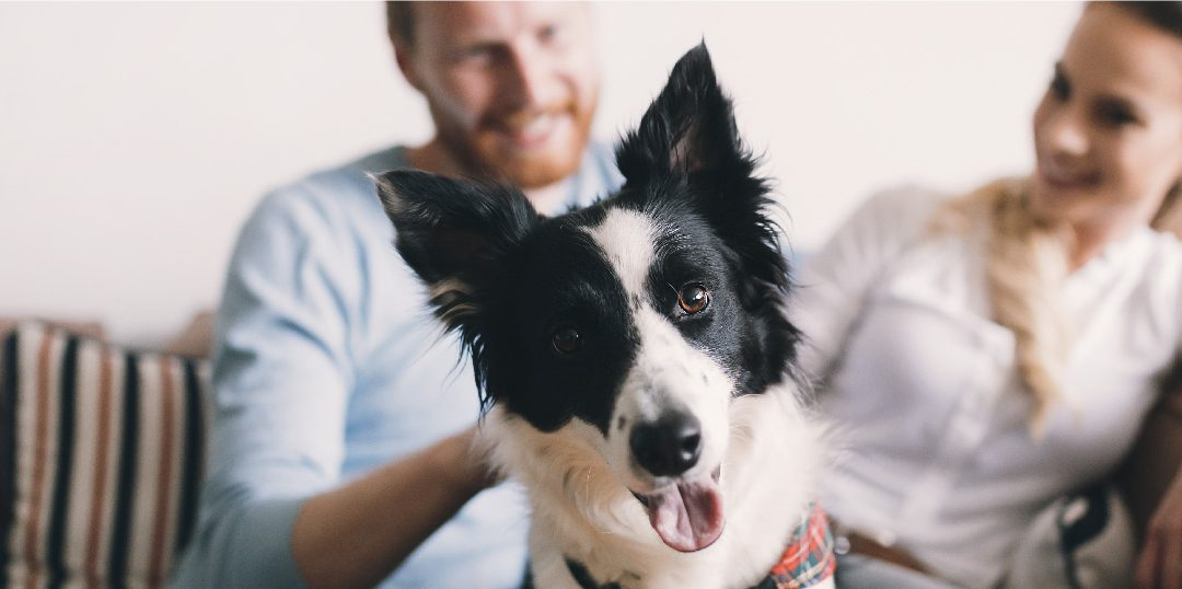 5 Health Benefits of Pet Ownership During Covid 19