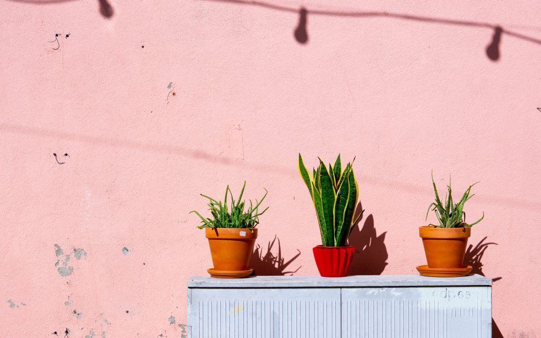 Best Indoor Houseplants for Your Apartment